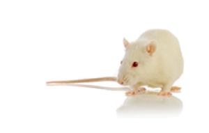 Often used in studies using lab rats or mice, we offer specialized support for our tumor measurement management system
